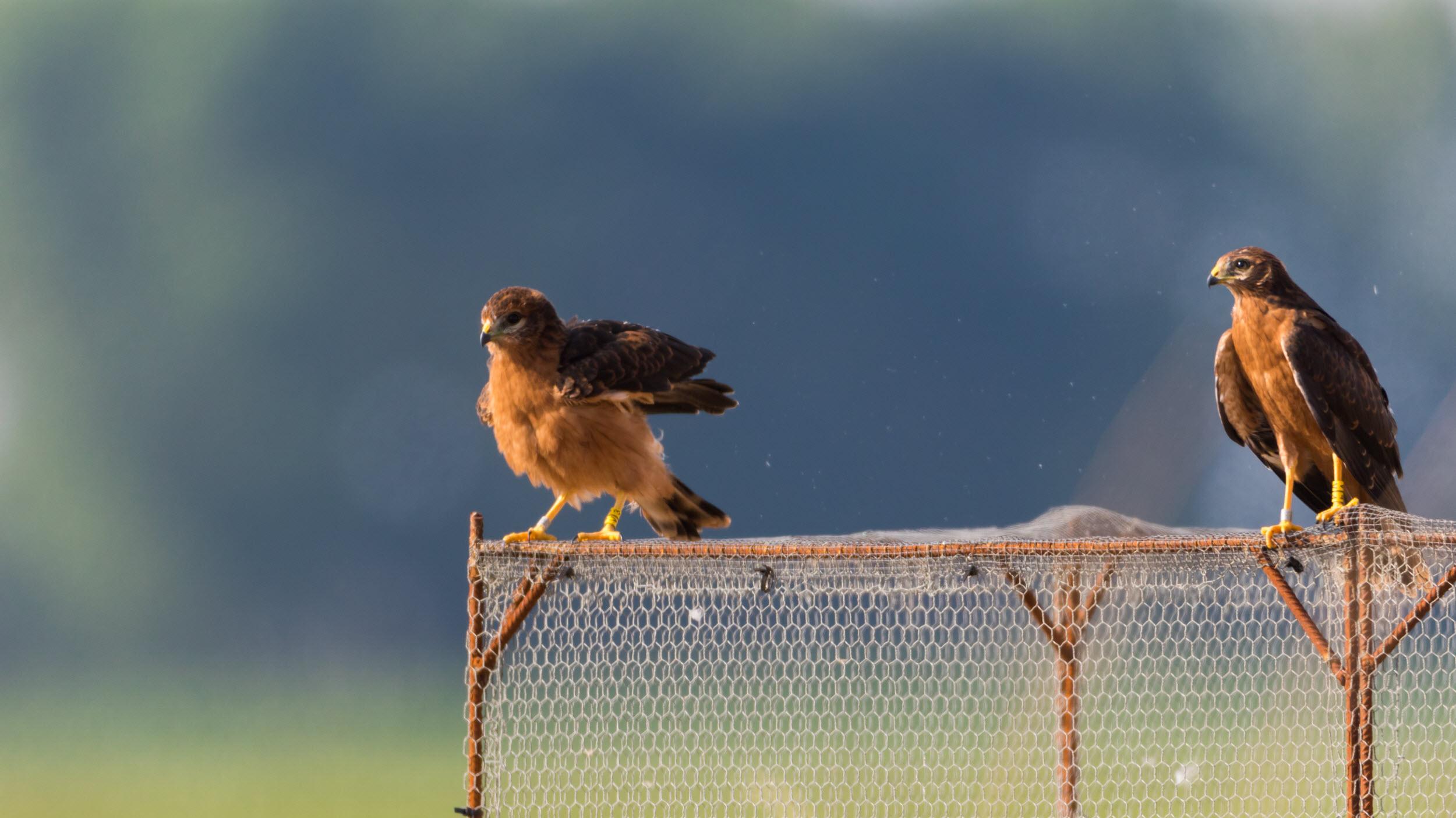 Bescherming akkervogels