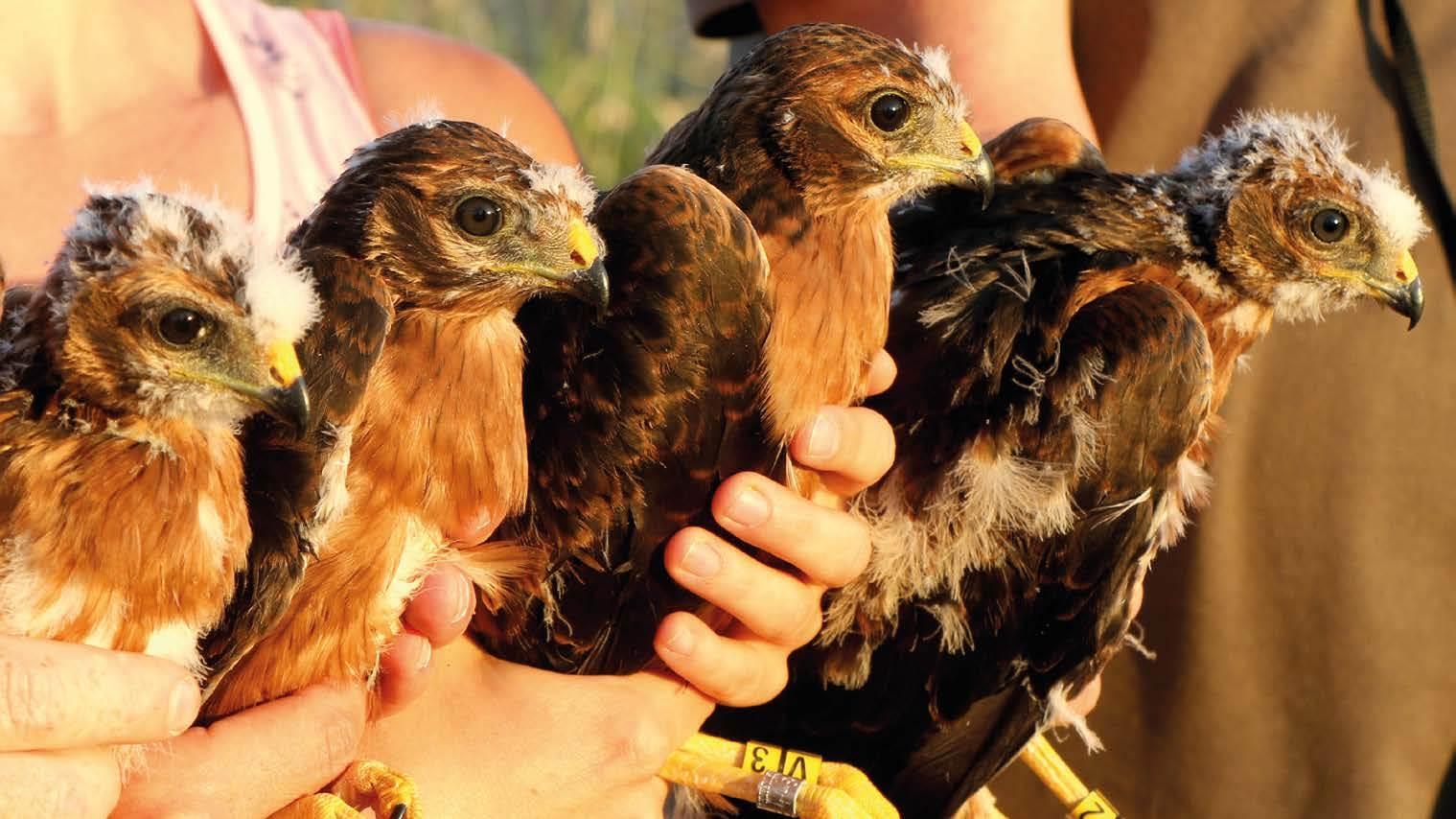 Akkervogels (EOS)
