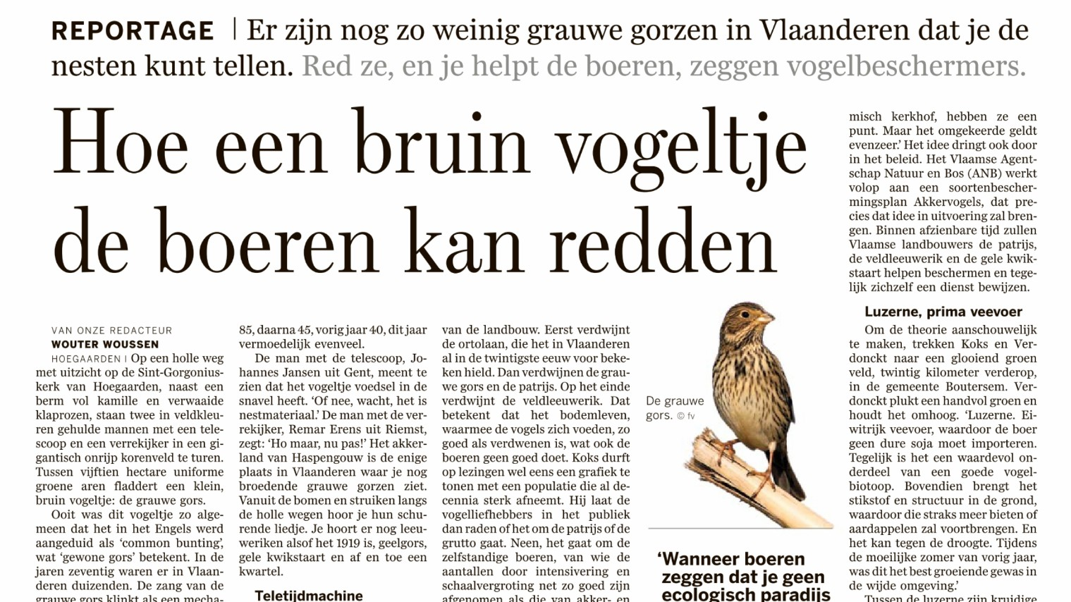 Hoe een bruin vogeltje de boeren kan redden.