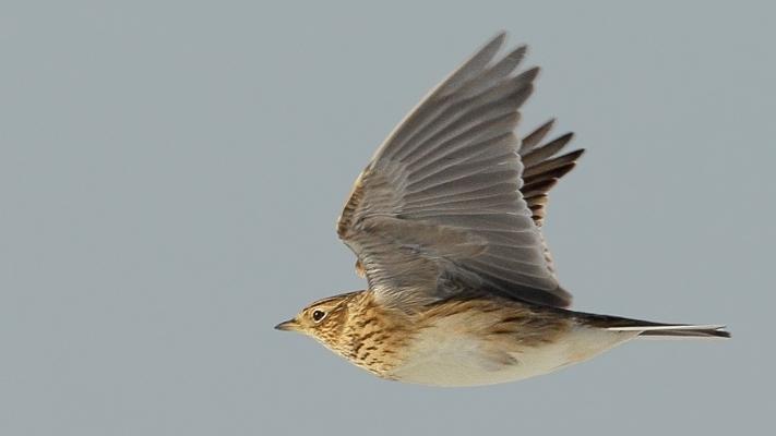 Waarom zijn akkervogels nog altijd stakkervogels?