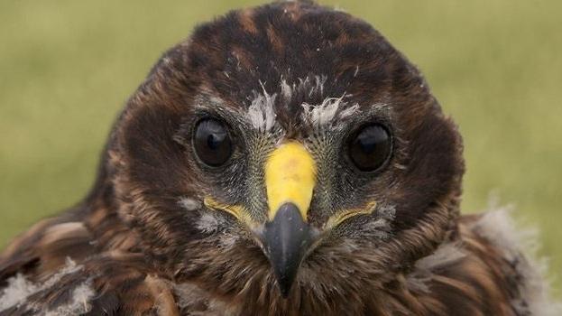 Cursus Akkervogels